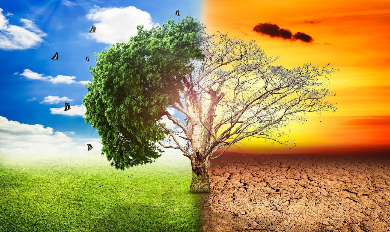 Decreasing Impact of International warming