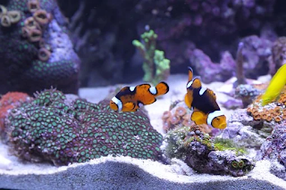 How To Build Eco-Friendly Aquarium And Keep Both Fish And Environment Happy