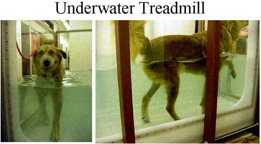 Underwater treadmill system for rehabilitation of a dog with orthopedic injury