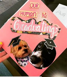 """A graduation cap that reads """"Our human is graduating."""""""