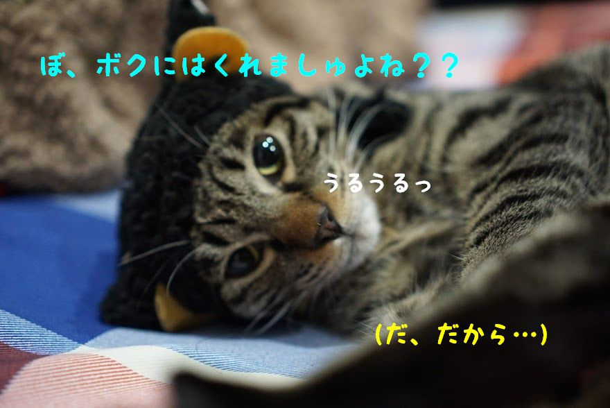 ラングドシャは「猫の舌」?バレンタインにおすすめ猫スイーツ!