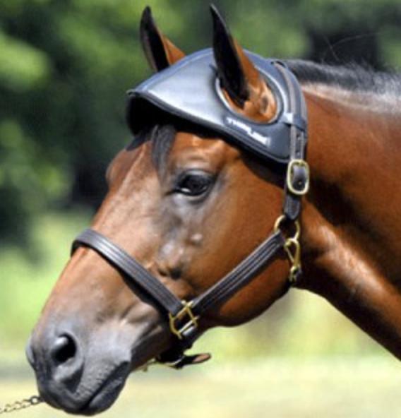 shipping head bumper for horse