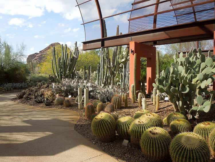 Cactuses at Desert Botanical Garden