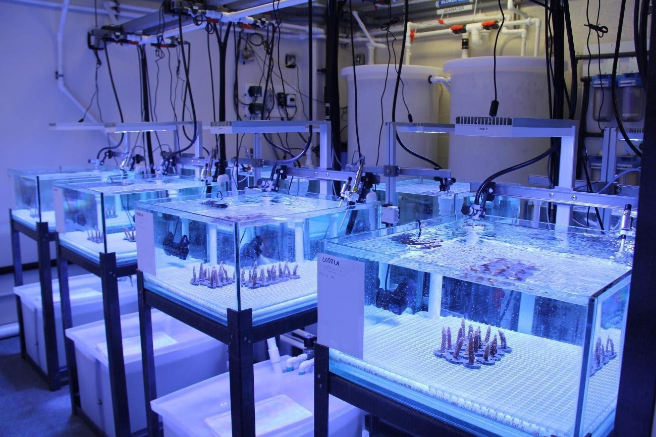 NOAA's Atlantic Oceanographic and Meteorological Laboratory ...