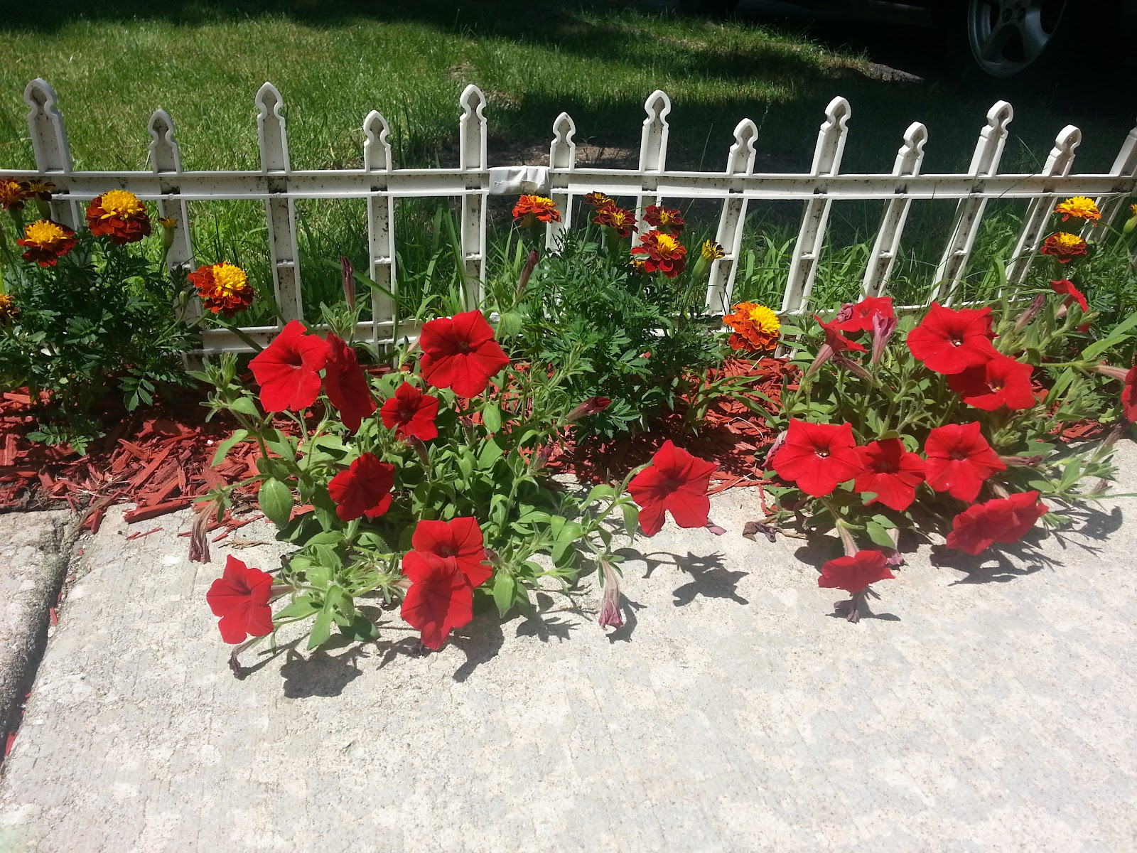 red wave petunias & marigolds picture