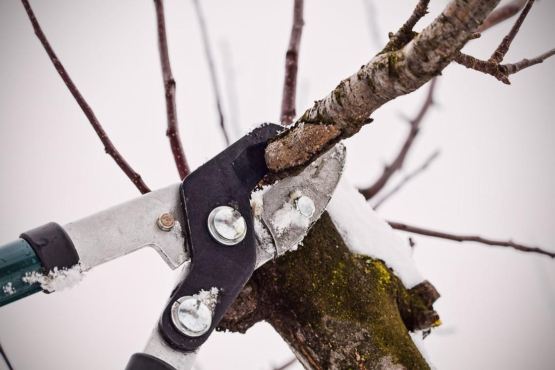Как ухаживать за плодовыми деревьями