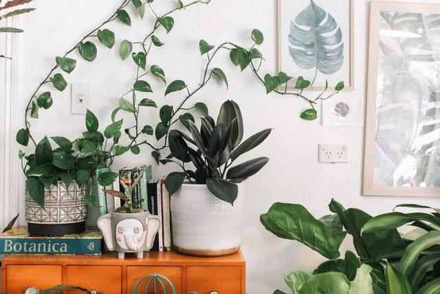 Bestel jouw nieuwe planten nog voordeliger met een Green Bubble Kortingscode.