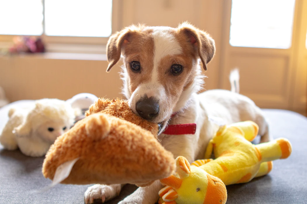 Dog with stuffed toys