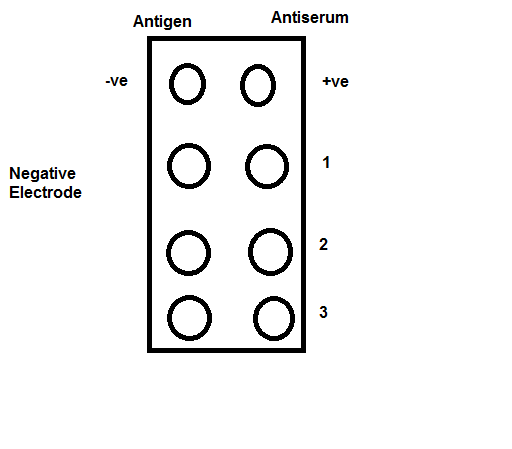 Template for loading of antigen and antiserum onto respective wells