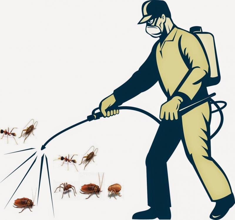Diệt côn trùng hiệu quả - an toàn