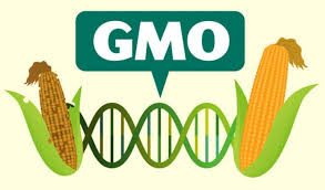 Viewpoint: 5 reasons you should be eating GMOs | Genetic Literacy Project