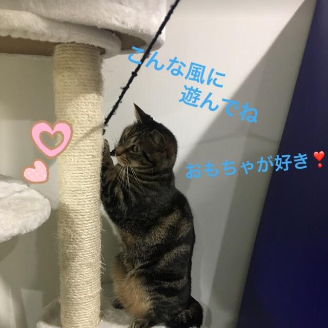 猫がいっぱい居る場所!愛媛県の青島の猫島に行く時の準備と注意点