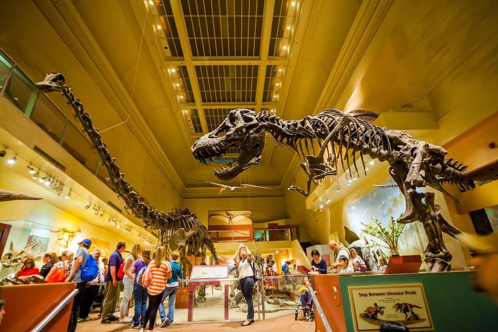 Washington, D.C. museums for kids Smithsonian t-rex replica
