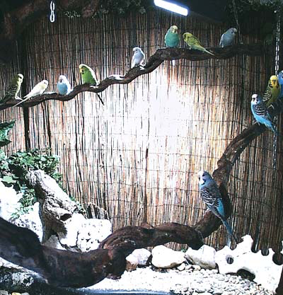 Perches over a fish pond and rock substrate over drains facilitate cleaning