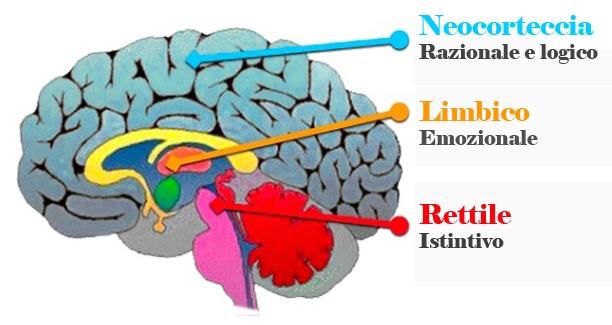 Posizionamento del Cervello Rettile, Limbico e Razionale. L'immagine ha il fine di dimostrare quali parti del cervello è in grado di misurare il neuromarketing. Fonte: Marketing Ignorante