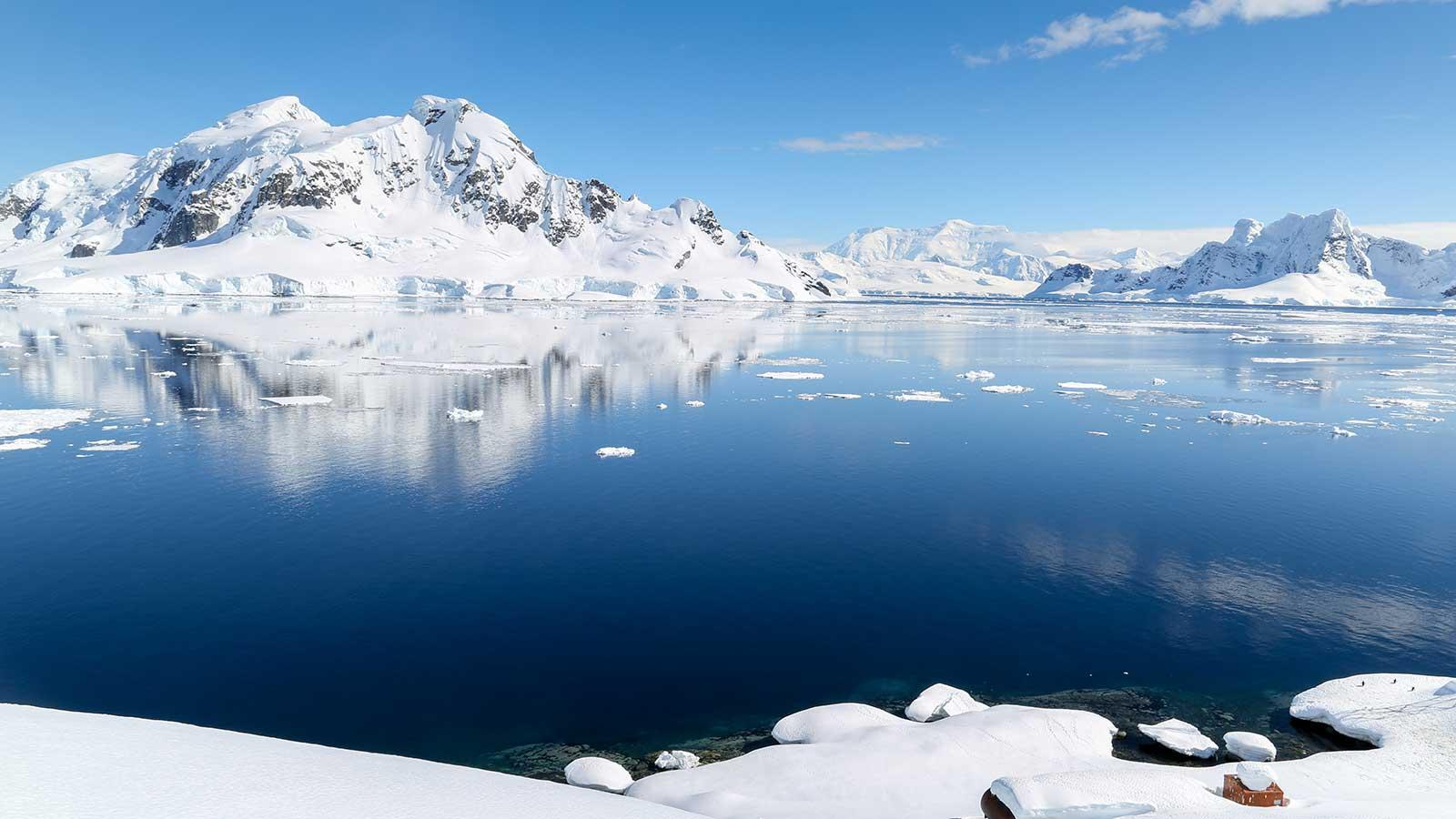 cookson-adventures-research-new-species-killer-whale-antarctica