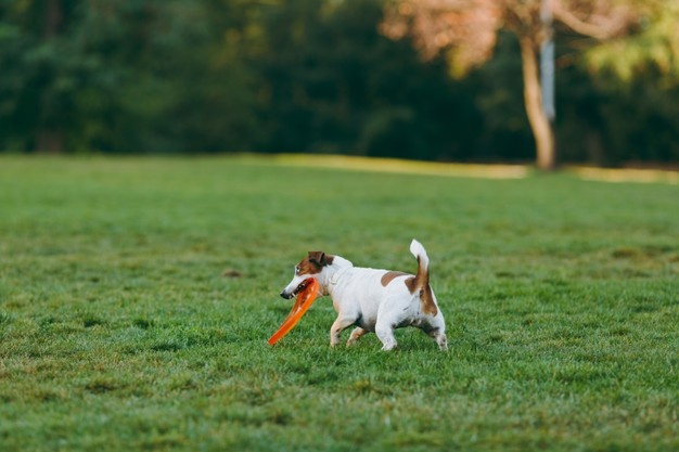 does artificial grass smell with dogs