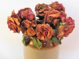konservera blommor med glycerin