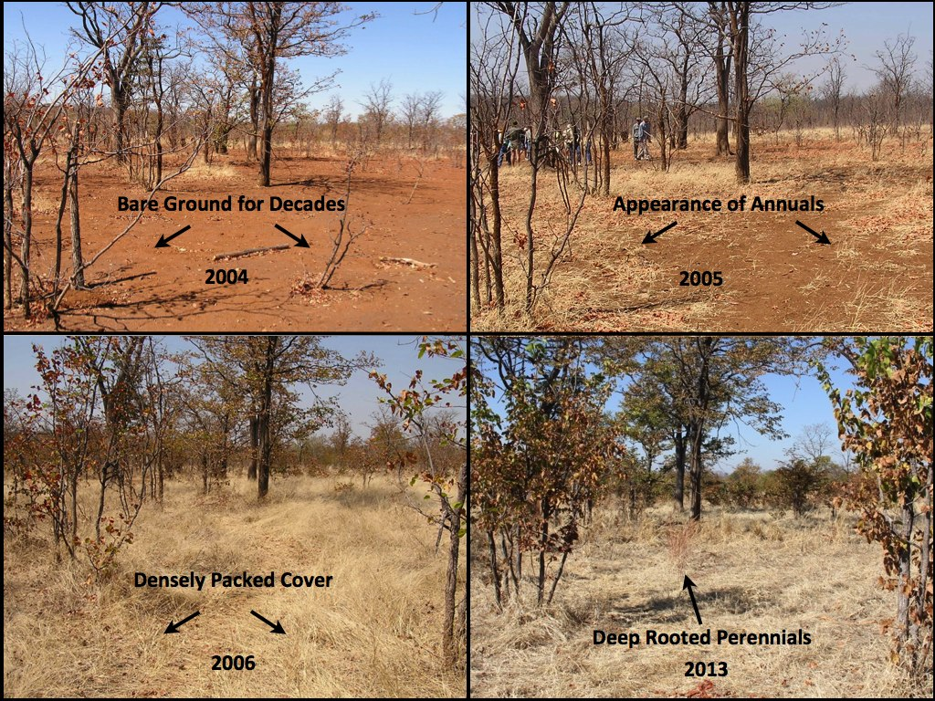 Land restoration in Zimbabwe