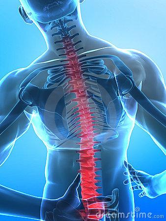 human-x-ray-spine-10255501.jpg