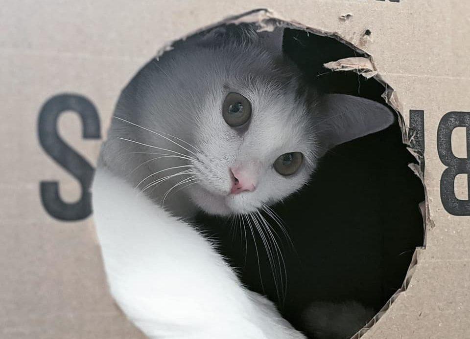 領養寵物 貓咪新手