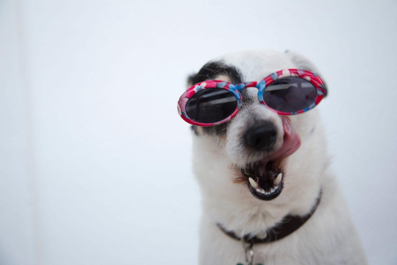 funny zoom background photos funny dog