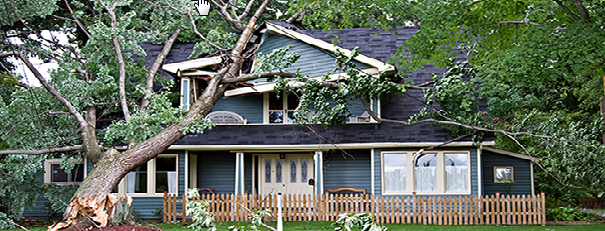 tree fell on a home
