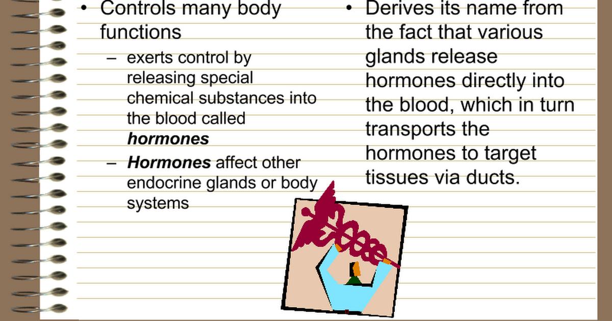 Endocrine System Presentation Google Slides