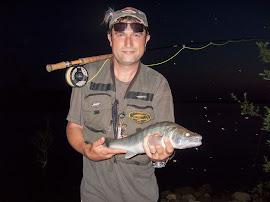 Вечерни летни бели риби