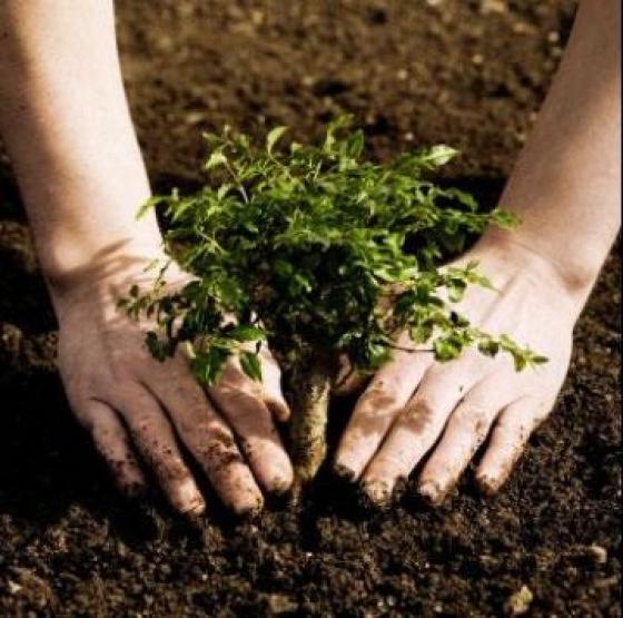 plantar arvore