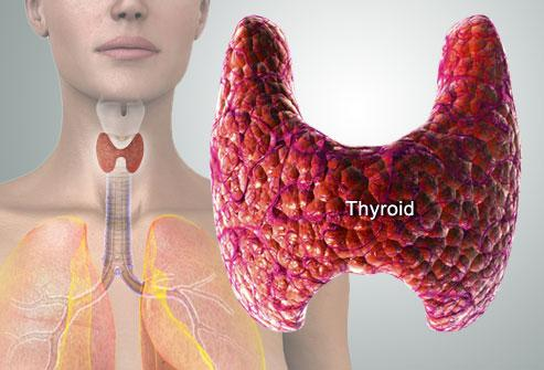 http://img.webmd.com/dtmcms/live/webmd/consumer_assets/site_images/articles/health_tools/thyroid_symptoms_and_solutions_slideshow/webmd_rm_photo_of_thyroid_diagram.jpg