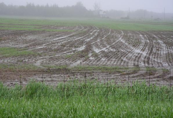 Rain and Mud on The Farm!
