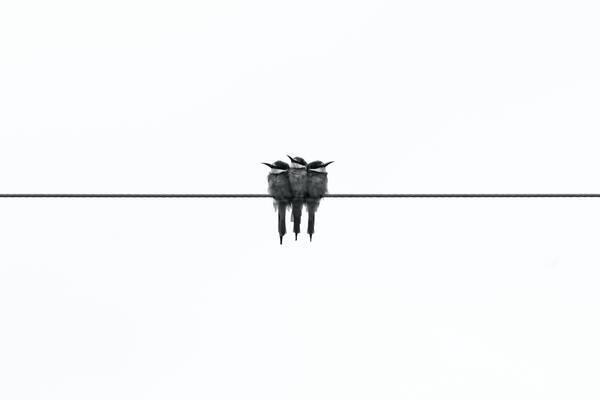 Photo minimaliste : tendance à suivre