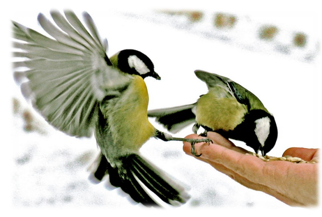 Картинки по запросу птица анимация