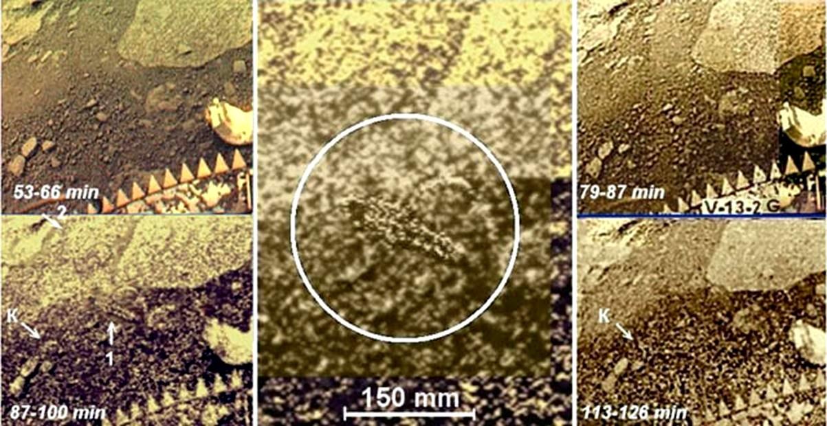 Forma života na Venuši.jpg