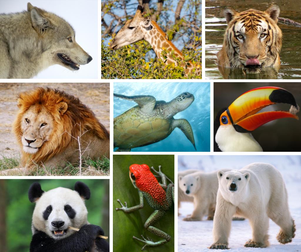 best spotting scopes for wildlife