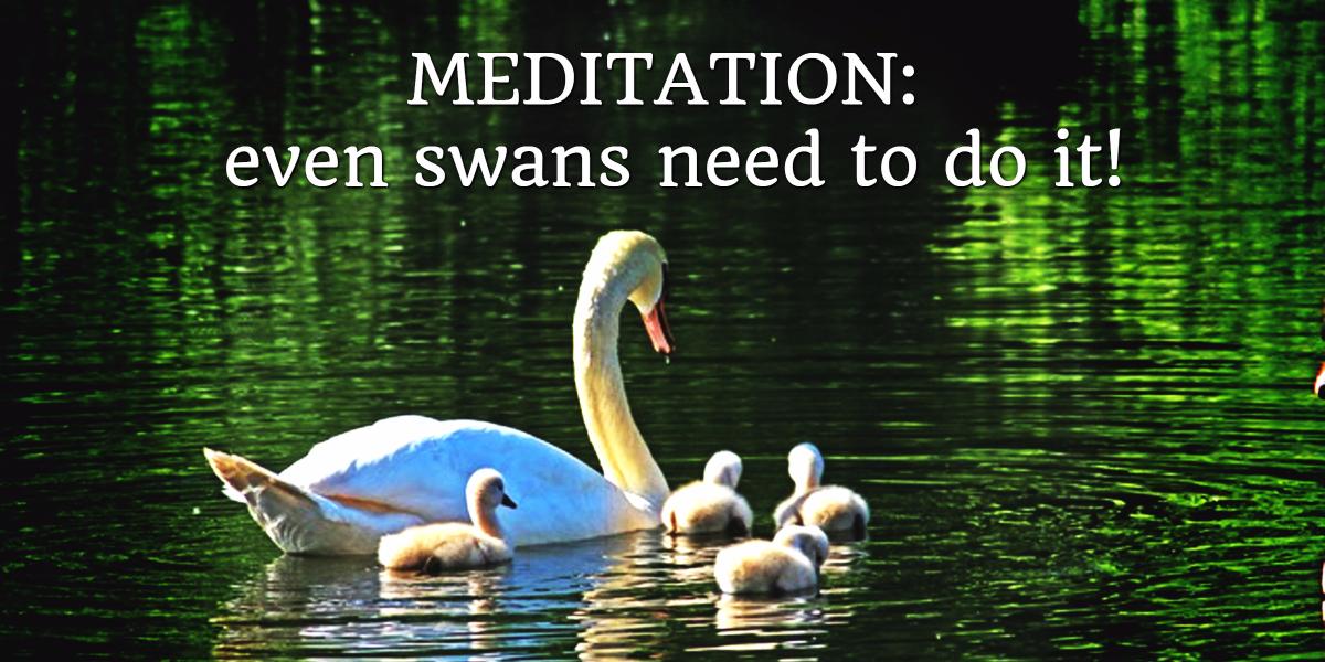 meditations-swan.jpg