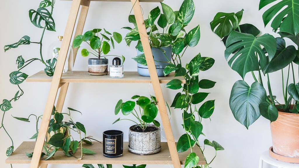 Indoor-House-plants-guide-beginner-plants-you-cant-kill-8.jpeg