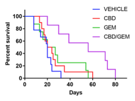 cbd and chemotherapy increased survival rates among mice with pancreatic cancer