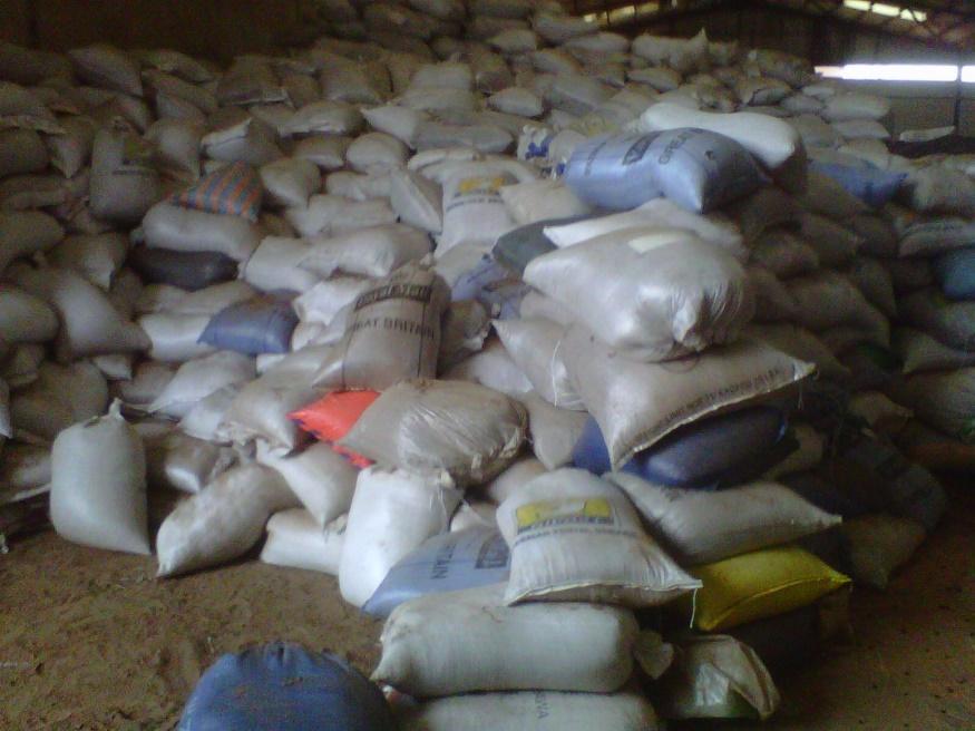 Feeding Pigs In Nigeria | No1 Pig Fan