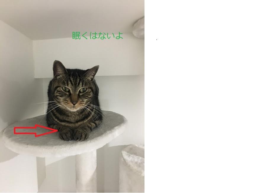 猫の寝相で分かる猫の気持ち!どうしてそうなった?