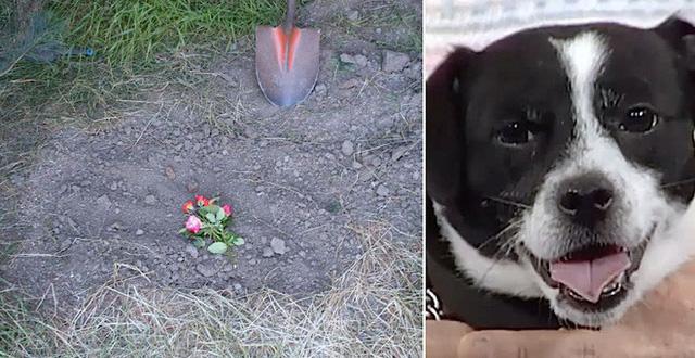 Việc chôn cất chó mèo tai hà nội và TPHCM có ý nghĩa gì