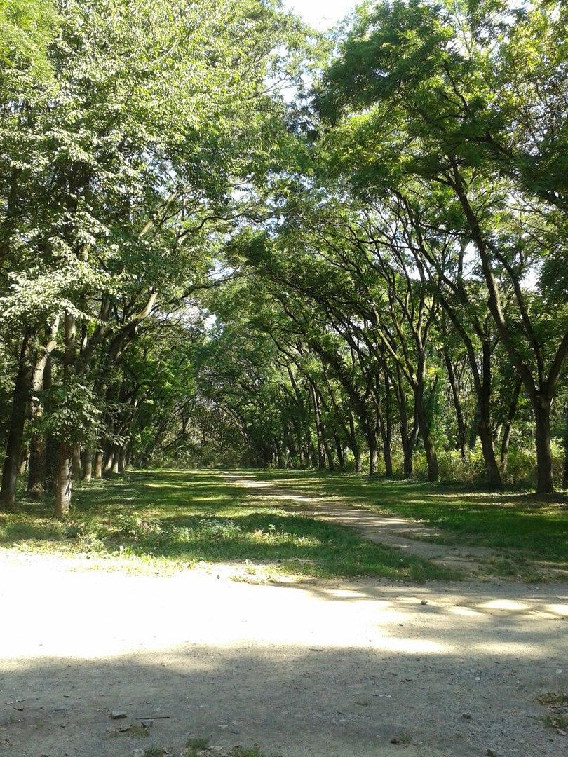 Боздоський парк біля річки Уж