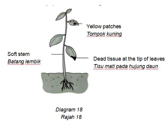 Apakah nutrien yang kekurangan pada tumbuhan ini?