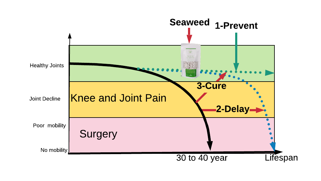 Understanding the causes of joint pain assist role of seaweed to reduce joint pain
