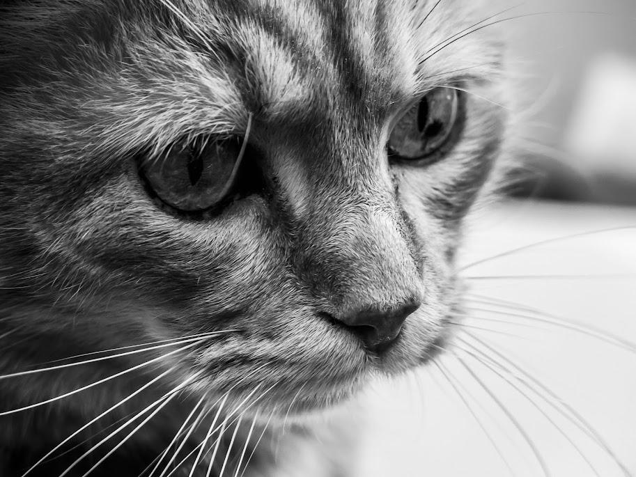 포유동물 사진 20140325 Sara Schiavi