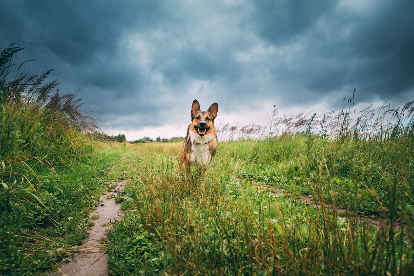 National Mutt Day: All About Our Canine Companions 123RF Blog