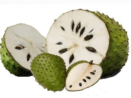 isi durian belanda