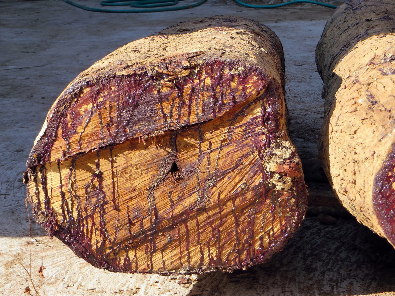 Rosewood Essential Oil: rosewood stump