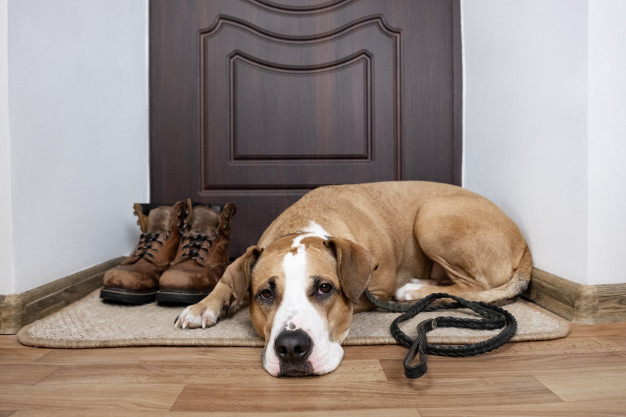 Are you looking for some comfortable and convenient door mat, read our 10 best inside door mats for hardwood floors 2021 review today!